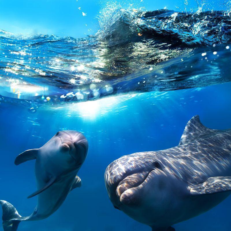 AnimalFacts18 Факты о животных, которые поднимут вам настроение