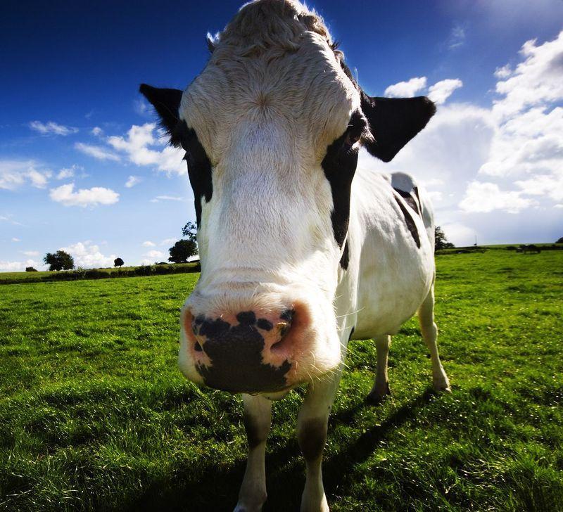 AnimalFacts19 Факты о животных, которые поднимут вам настроение