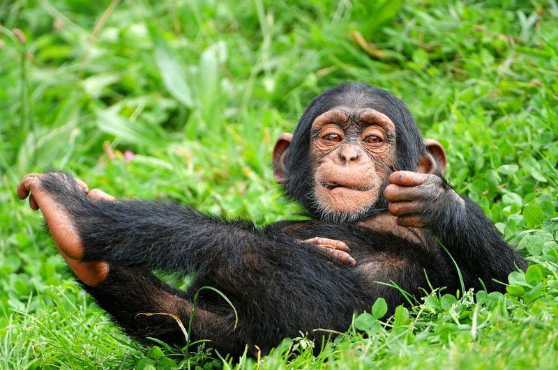 AnimalFacts22 Факты о животных, которые поднимут вам настроение
