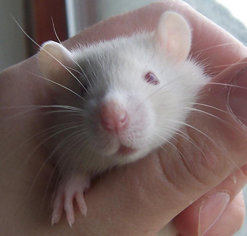 AnimalFacts23 Факты о животных, которые поднимут вам настроение