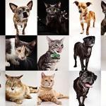 Эмоции животных от Эвана Кафки