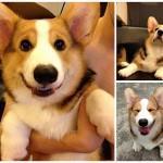 Самая эмоциональная собака на Instagram
