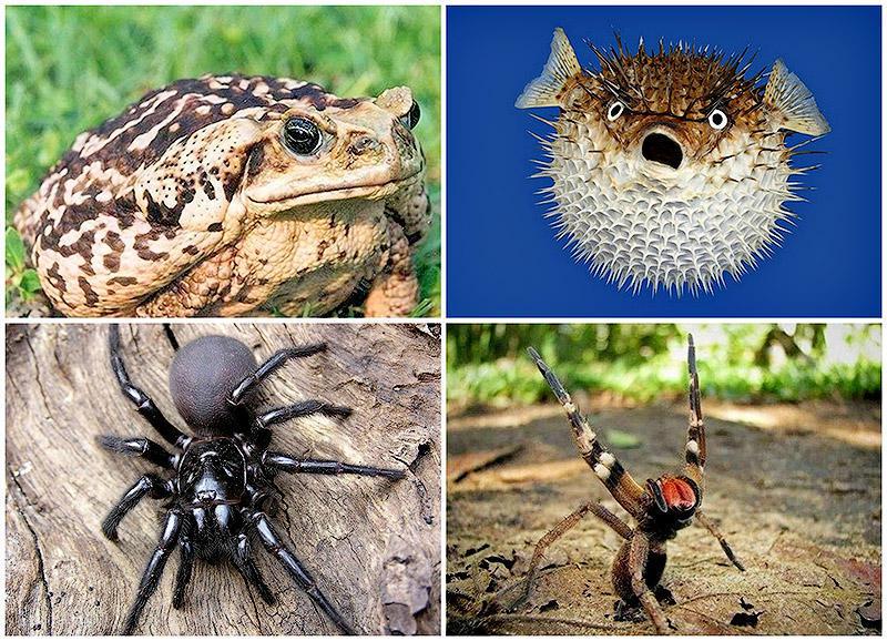 раскатывает внедорожниках ядовитые животные на россии картинки стиль может