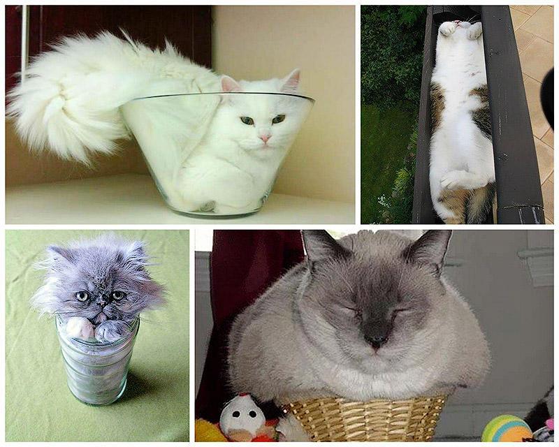 BIGPIC9 Кошки   это жидкость, есть доказательства