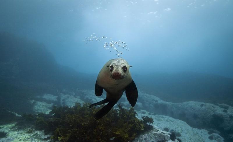 Счастливые капские морские котики