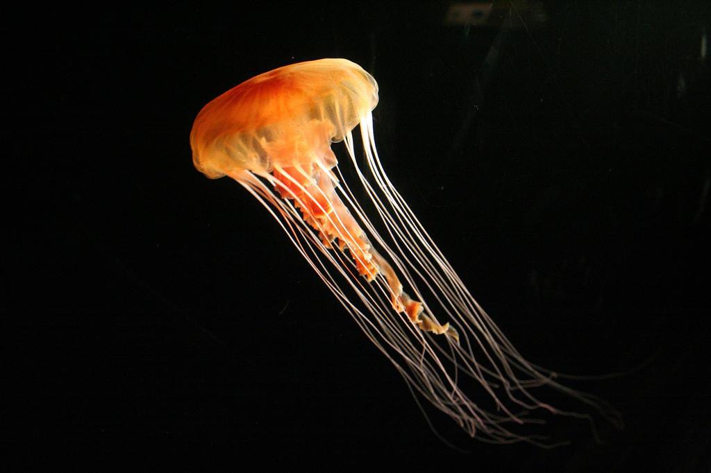 Jellyfish05 Самые красивые и яркие медузы