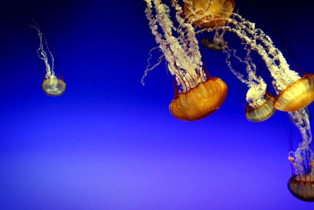 Jellyfish06 Самые красивые и яркие медузы