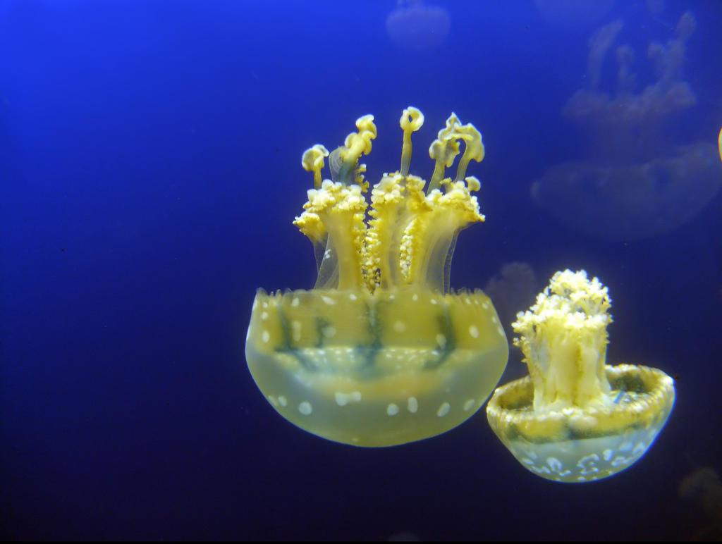 Jellyfish19 Самые красивые и яркие медузы