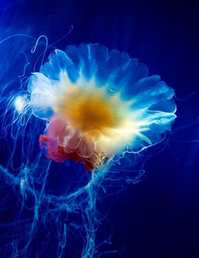 Jellyfish25 Самые красивые и яркие медузы