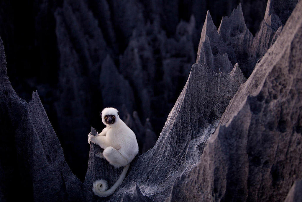 MM7820 090517 17708 Каменный лес на Мадагаскаре
