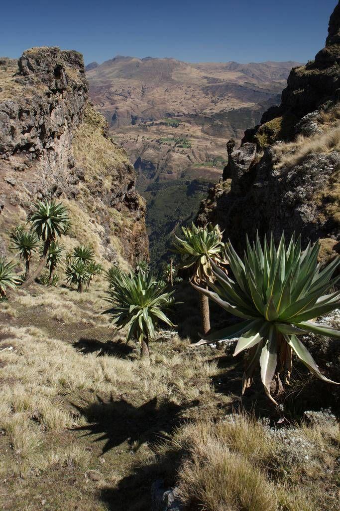 RoofofAfrica03 «Крыша Африки»: впечатляющая красота Эфиопского нагорья