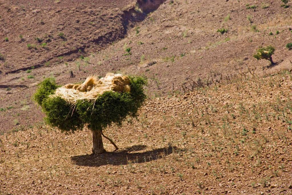 RoofofAfrica17 «Крыша Африки»: впечатляющая красота Эфиопского нагорья