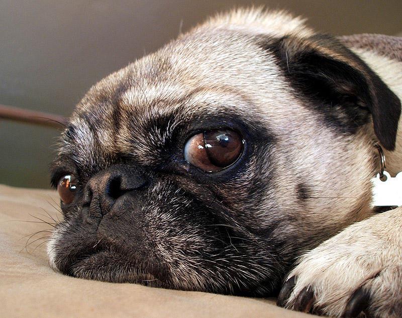 SideEyes11 Эмоциональная подборка: Косые взгляды в мире животных