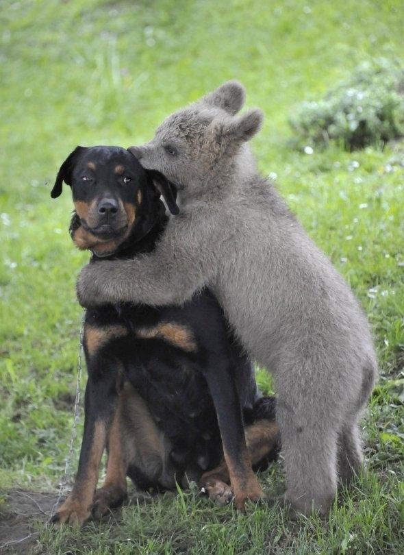 SideEyes12 Эмоциональная подборка: Косые взгляды в мире животных
