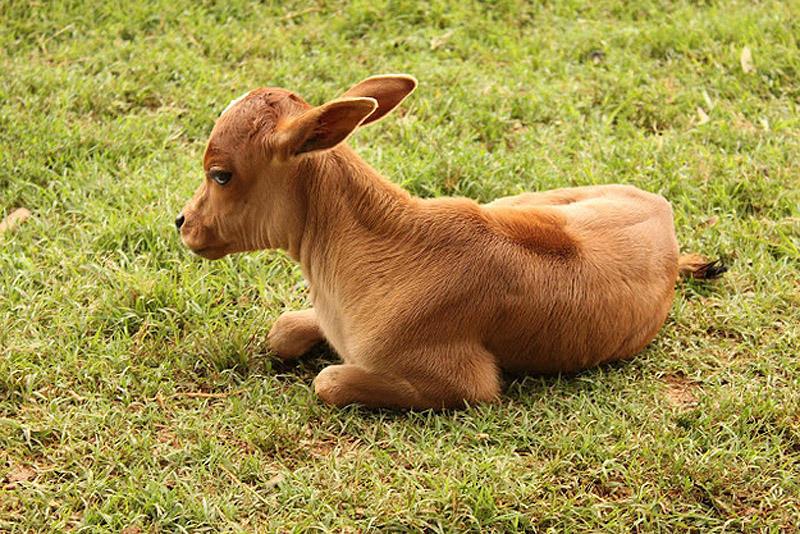 SideEyes18 Эмоциональная подборка: Косые взгляды в мире животных