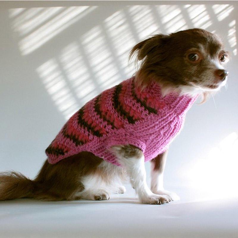SideEyes19 Эмоциональная подборка: Косые взгляды в мире животных