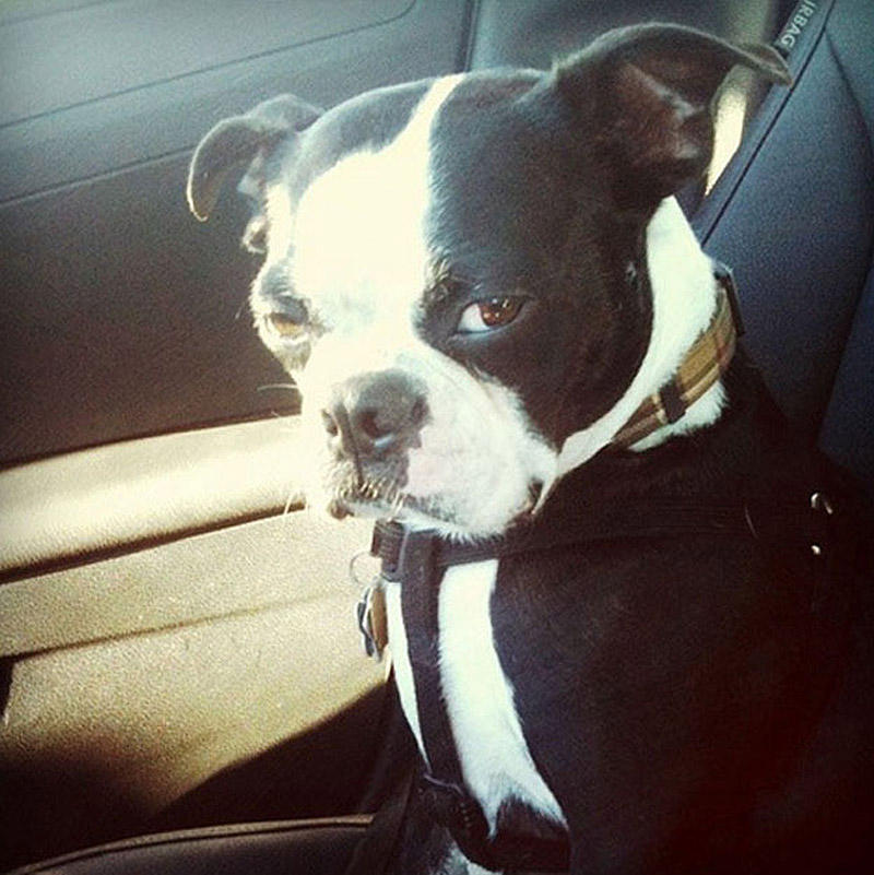 SideEyes22 Эмоциональная подборка: Косые взгляды в мире животных