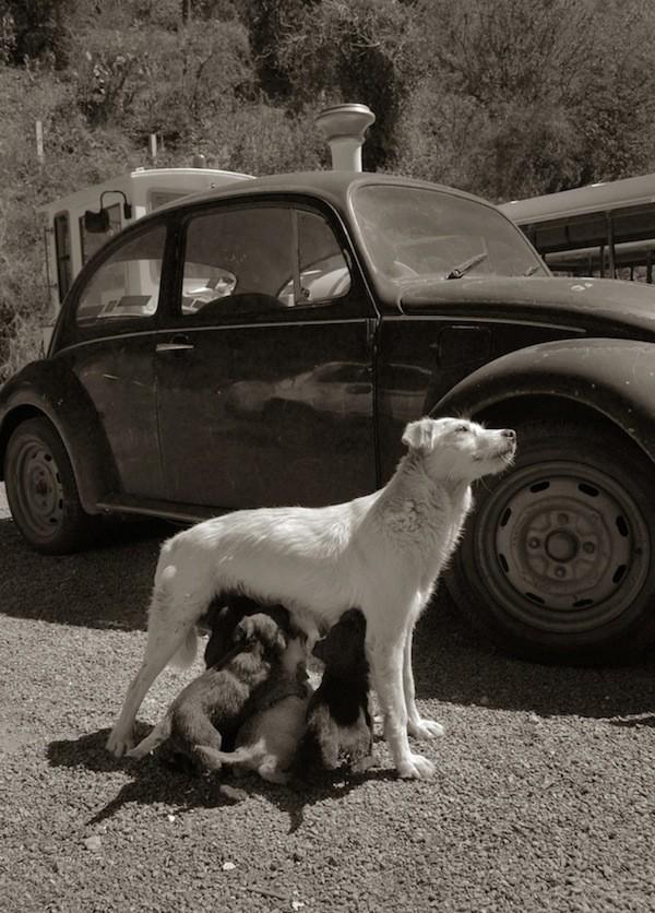 StreetDogs01 Выразительные и трогательные портреты уличных собак