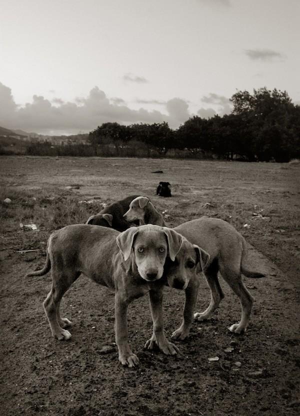 StreetDogs02 Выразительные и трогательные портреты уличных собак