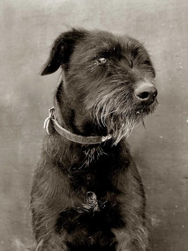 StreetDogs03 Выразительные и трогательные портреты уличных собак