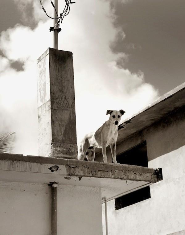 StreetDogs04 Выразительные и трогательные портреты уличных собак