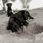 Выразительные и трогательные портреты уличных собак