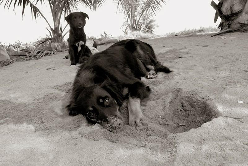 StreetDogs06 Выразительные и трогательные портреты уличных собак