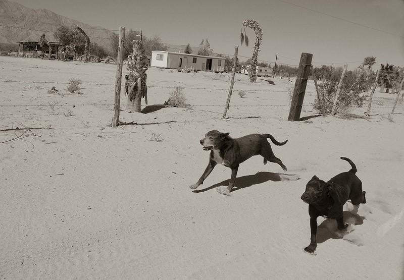 StreetDogs07 Выразительные и трогательные портреты уличных собак
