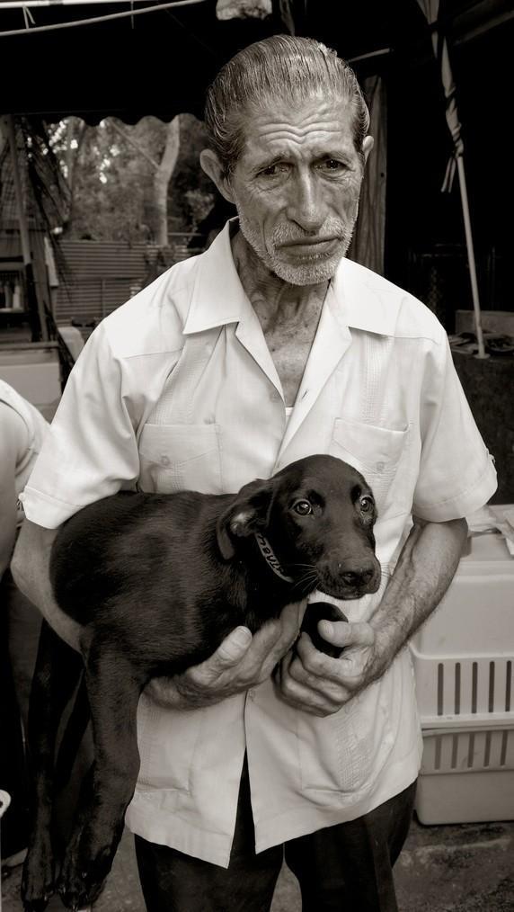StreetDogs09 Выразительные и трогательные портреты уличных собак