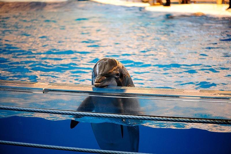 dolphins02 Самые удивительные факты о дельфинах
