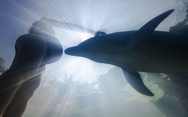 dolphins12 Самые удивительные факты о дельфинах