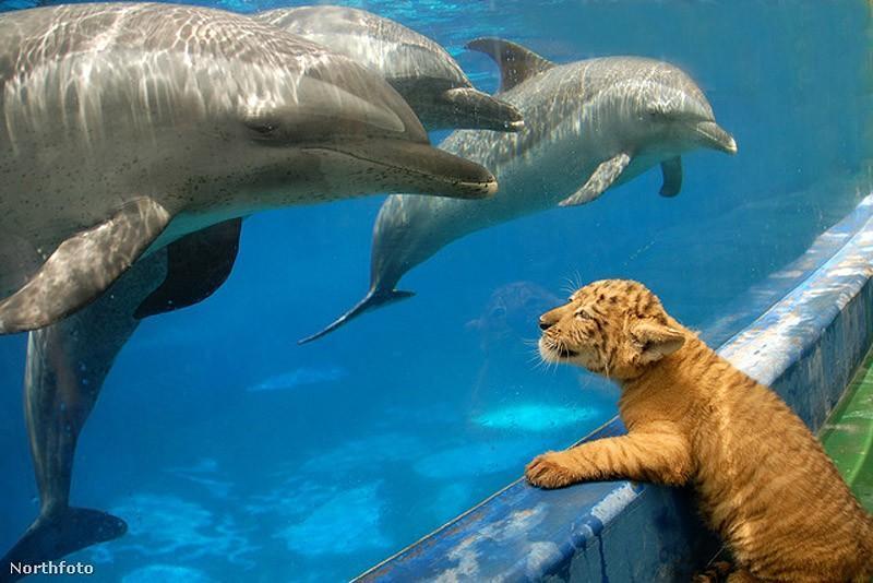 dolphins16 Самые удивительные факты о дельфинах