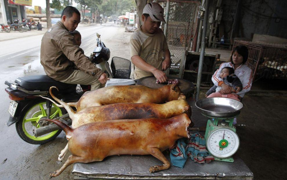 extremefood07 Самая экстремальная еда, которой можно угоститься на этой планете