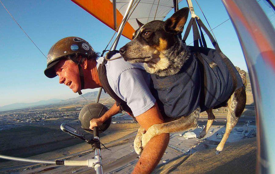 flyingdog01 Летающий пес