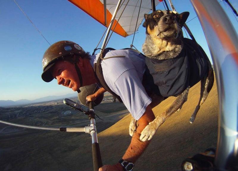 flyingdog06 800x576 Летающий пес
