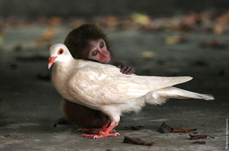 friendship09 Лучшему другу посвящается
