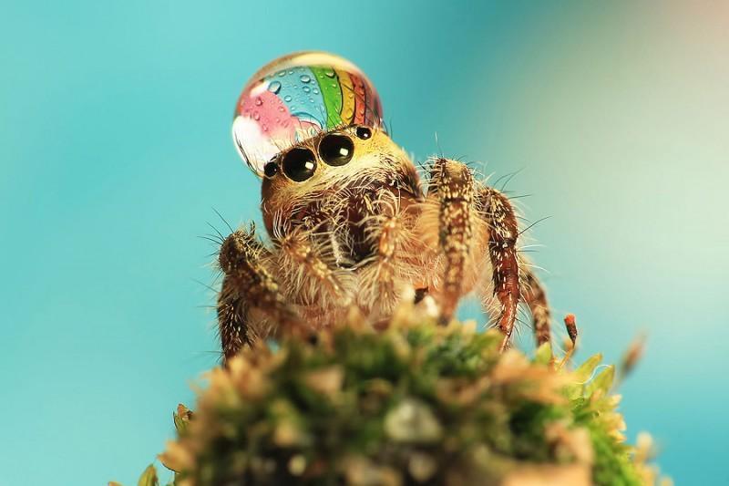 spiders08 800x533 Умилительные пауки в шапочках из воды