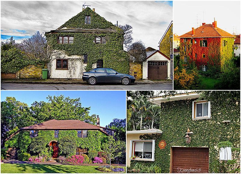 Дома, утопающие в зелени
