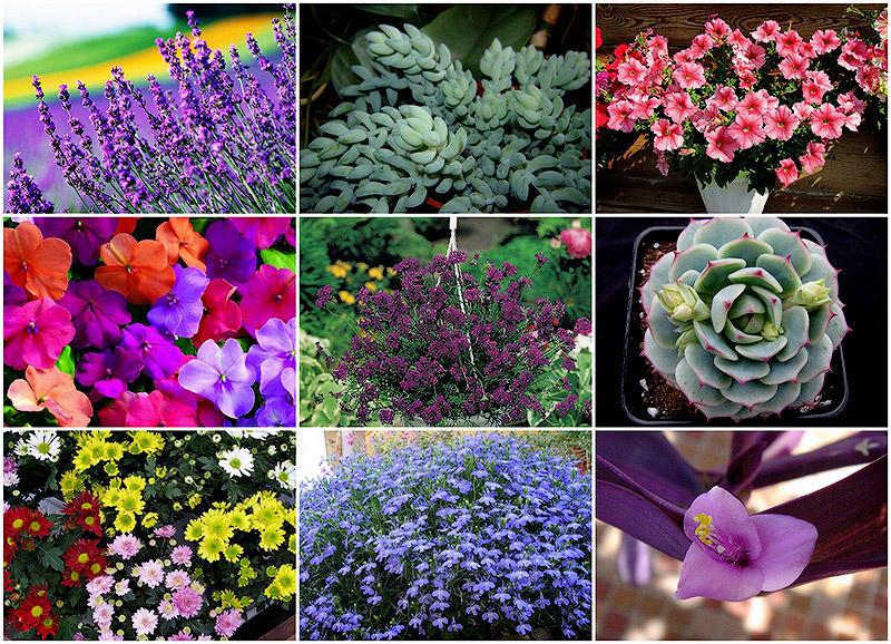 BIGPIC24 10 наиболее подходящих растений для выращивания в подвесных горшках