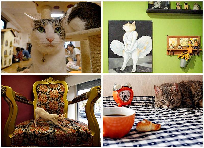 Самые необычные «кошачьи» кафе из разных странмира