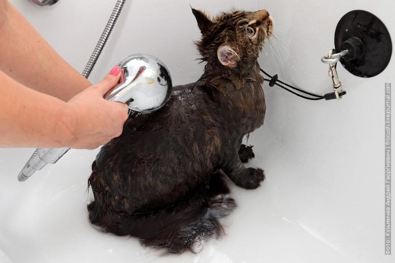 Как правильно помыть котенка в домашних условиях