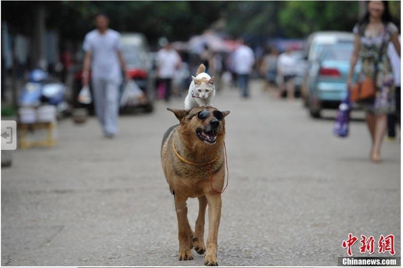 catdog01 Странная парочка на улице: собака и кошка вместе