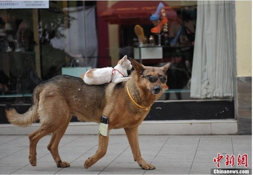 catdog02 Странная парочка на улице: собака и кошка вместе