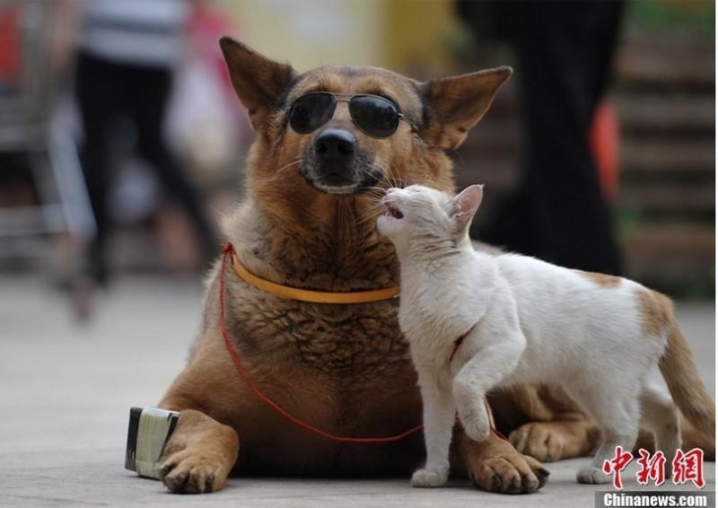 catdog03 800x566 Странная парочка на улице: собака и кошка вместе