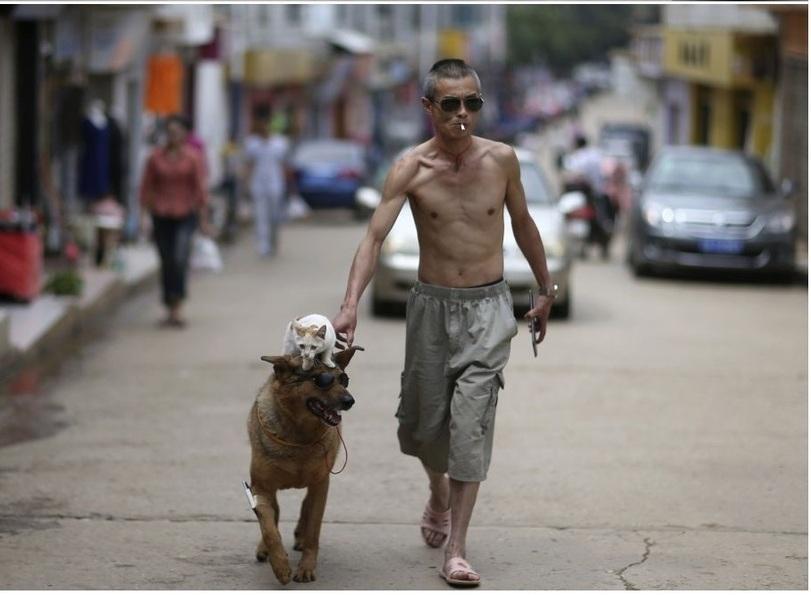 catdog04 Странная парочка на улице: собака и кошка вместе