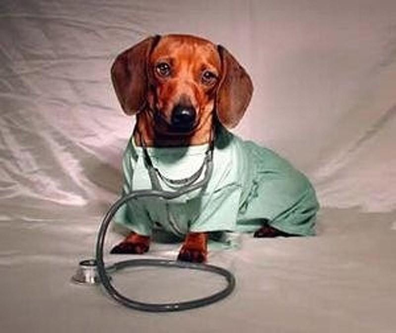 В нашей клинике проводится бесплатная вакцинация домашних животных против бешенства.  Добавить. лаборатория.