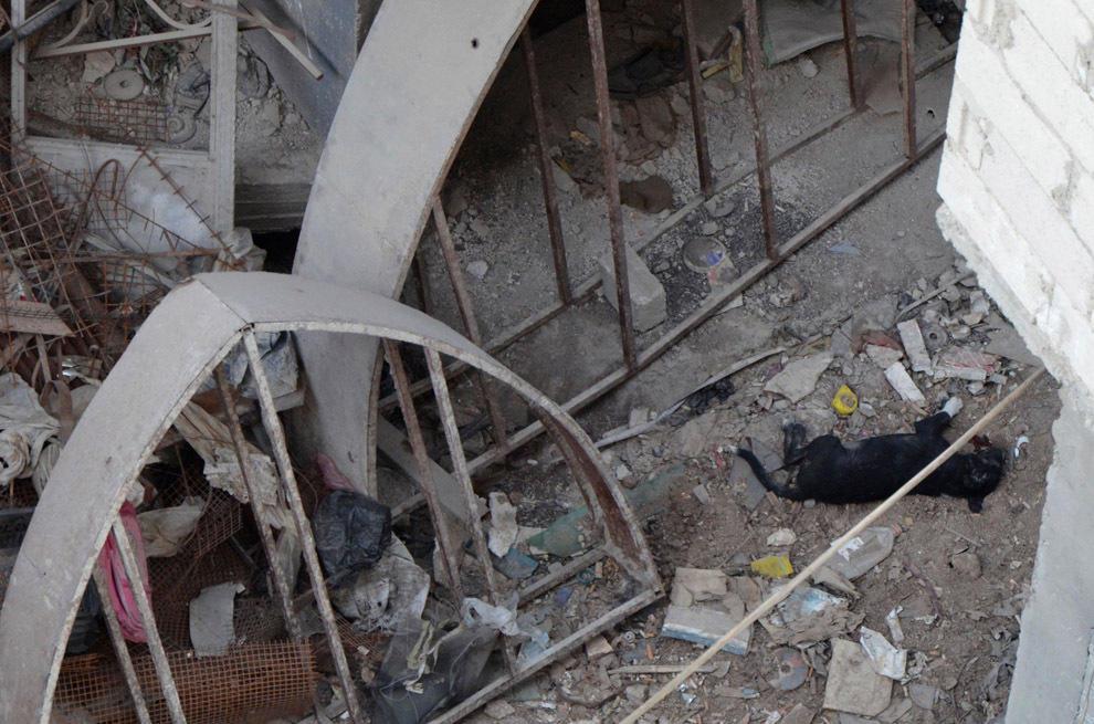 gazsiria07 Газовая атака в Сирии