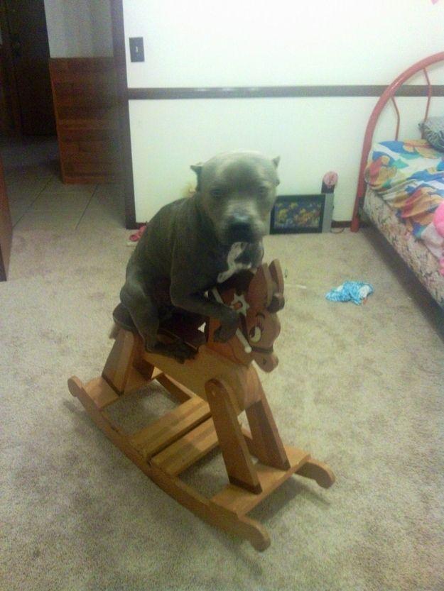 howtodog05 Собака, ты все перепутала...