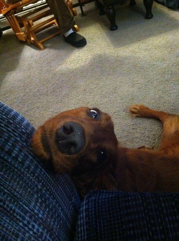 howtodog14 Собака, ты все перепутала...
