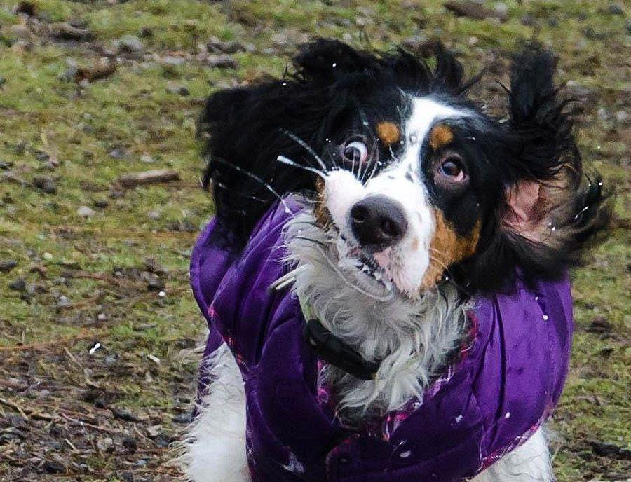 howtodog26 Собака, ты все перепутала...